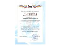 диплом призёра 1